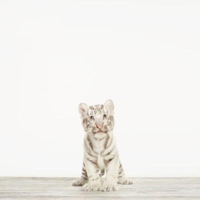 ©Sharon-Montrose_Animal-Photographer-102